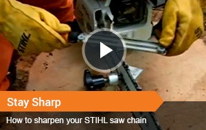 Watch Video ~ Stay Sharp
